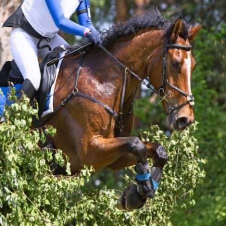 Eventing_Nurmi_0001_medium-624×468